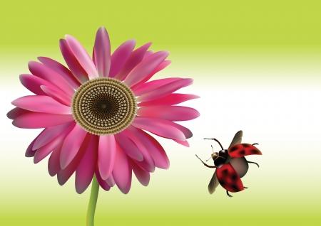 beautiful gerbera daisy  Illustration