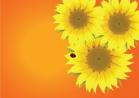 beautiful sunflower with ladybird