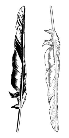 Vector Crow Feather