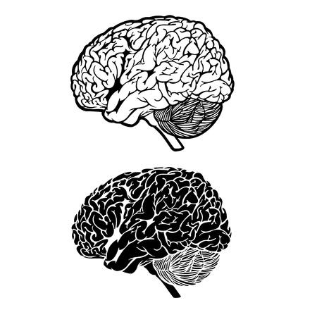 contemplate: Vector Human Brain Illustration