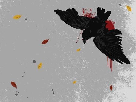pavement: Dead Crow on the Pavement