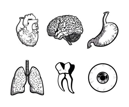 人体の部品 (1色)  イラスト・ベクター素材