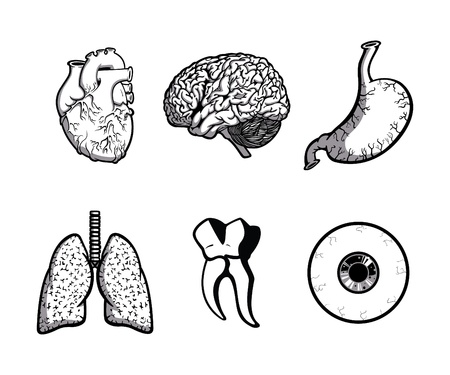 human internal organ: Human Body Parts (One Color)
