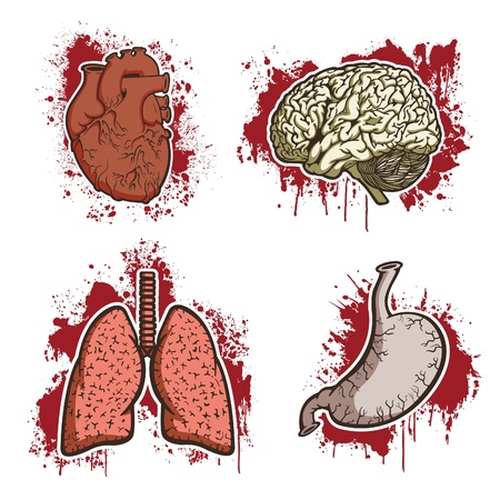 животик: Человеческих органов Иллюстрация