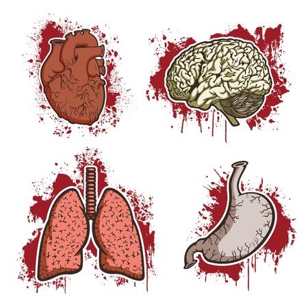 Human Organs Stock Vector - 12097422