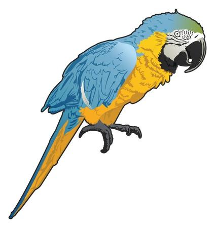 Papegaai Stock Illustratie