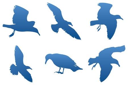Vector Silhouetten Seagull Standard-Bild - 12093515