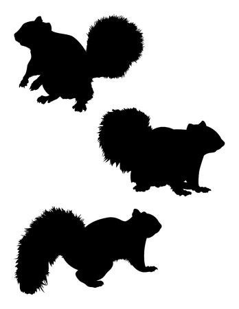 Vector Squirrel Silhouette