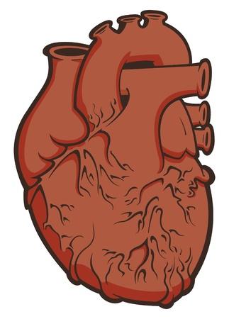 hartje cartoon: Hart Vector