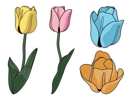 Tulips Illusztráció