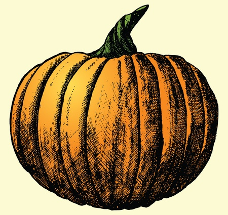 crosshatching: This is a hand drawn sketch of a pumpkin. Illustration