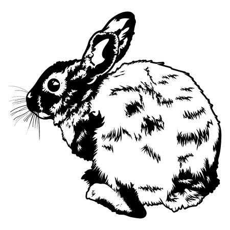 wild rabbit: Wild Rabbit