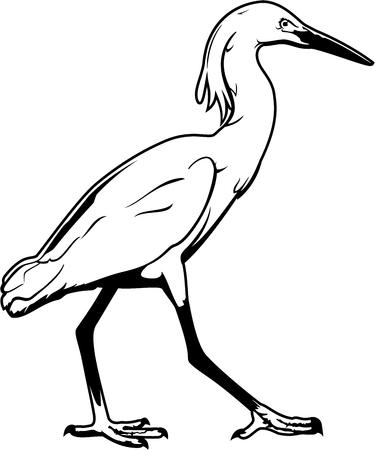 Crane-bird. Black and white vector illustration of a sea crane.