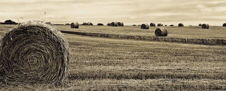 Sepia toned image of round hay bales in a field after harvest Stock Photo