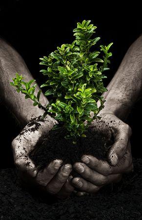 replant: Mani di sesso maschile in possesso di un piccolo albero. Le mani sono sporche. Archivio Fotografico