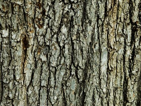 The bark on a trunk of a tree taken from close up showing lots of texture. Stock Photo