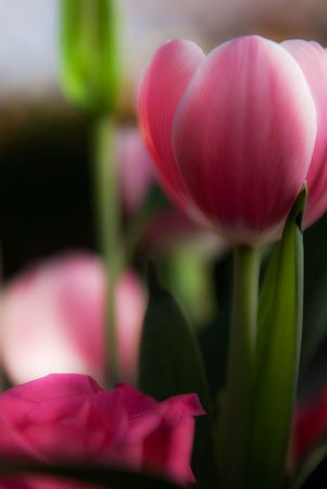A bunch of flowers with green leaves. Tulips, roses etc.