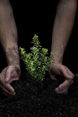 Male hands holding a small tree. Hands are dirty. Stock Photo
