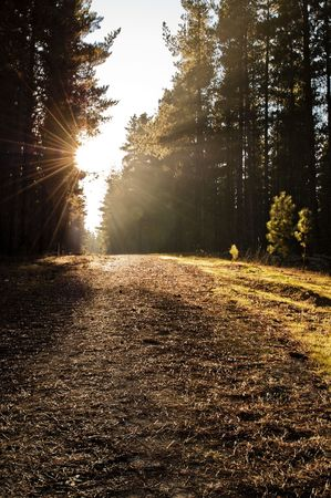 A path through the woods during sunset. Beautiful warm light. Stock Photo