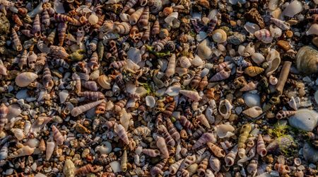Background made up of thousands of small shells of various shapes, styles, sizes and colours Stock Photo - 17692718