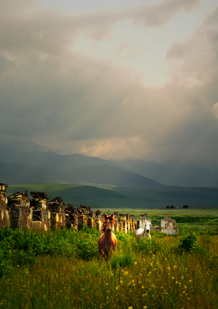 farmlife: Wild Horses in amongst the ruins of an old barn Stock Photo