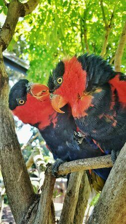 eye: Two beautiful tropical birds
