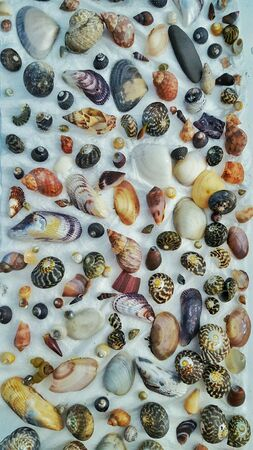 bright: Collection of beautiful sea shells