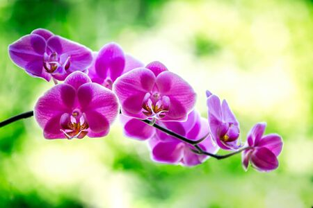 Stunning purple orchids on a soft out of focus green leafy background