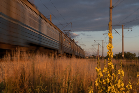 beautiful image of a train passing at sunset through the fields