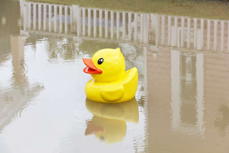 ducky: Yellow rubber duck in the pond. Stock Photo