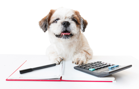 poodle mix: Cute dog, Shih tzu, Poodle mix with notebook and pen and calculator on white background, Isolated.