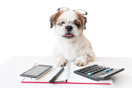 poodle mix: Cute dog, Shih tzu, Poodle mix with notebook and pen, and calculator and mobile phone on white background, Isolated.