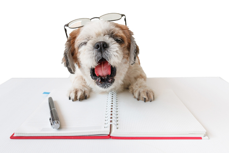 poodle mix: Cute dog, Shih tzu, Poodle mix with notebook and pen on white background, isolated. Stock Photo