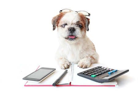 Shih tzu, poodle mix wear eyeglasses with work equipment on table.