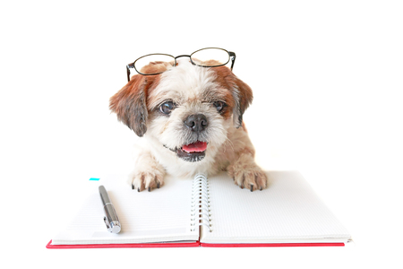 Shih tzu, poodle mix wear eyeglasses with book and pen on table.