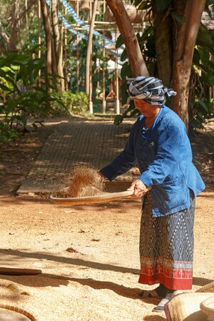 Nakhonratchasima, Thailand - December 31, 2017: Native Thai woman filter raw rice for cooking at Jim thompson farm.