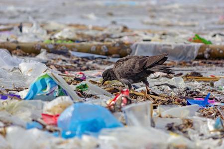 Paloma caminando en la playa de basura.