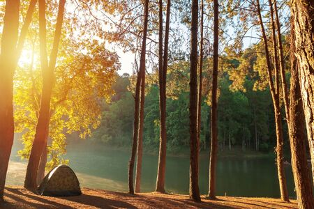 Tourist tent in green forest near the lake in Thailand. Reklamní fotografie
