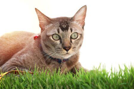 A Cat sit on green grass.