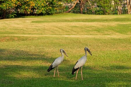 Birds stand on the grass in the garden.