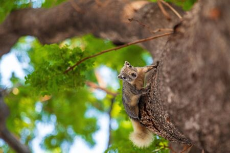 A squirrel on the tree in forest.