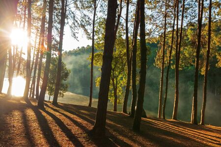 Green forest near the lake with sunrise in MaeHongSon Thailand. Reklamní fotografie