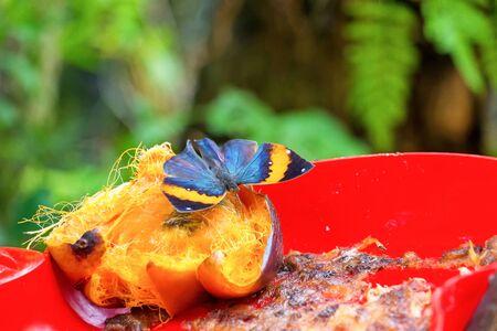Butterfly eat food in the farm. Reklamní fotografie