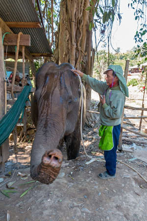 Mae Hong Son, Thailand - february 9, 2019: Old man keeper shower the elephant at Long Neck village Baan Huay Sua Thao. Redakční