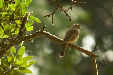 Bird on Tree Imagens