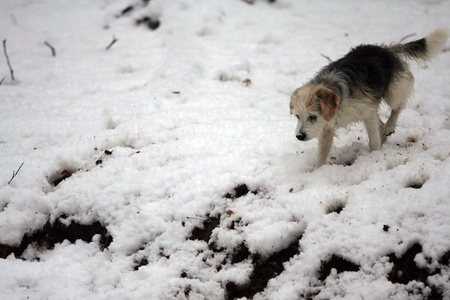 bounding: Dog in the snow  Stock Photo