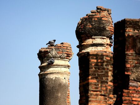 pigeon owl: the pigeon in a hole on a brick