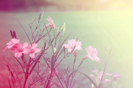 colorize: flower background. beautiful flowers Stock Photo