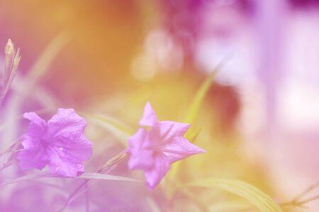 sch�ne blumen: flower background. beautiful flowers Lizenzfreie Bilder
