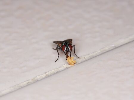 cluster house: macro of  fly eating